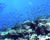 地上の楽園モルディブの魅力がギュッとつまった4K動画