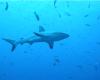 これぞパラオ!サメ、マンタ、ウミガメ・・・世界中のダイバー憧れの海
